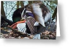 Duck Dance Greeting Card by Anna Villarreal Garbis