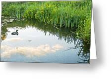 Duck On A Lake Greeting Card by Svetlana Sewell