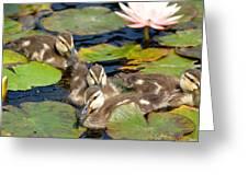 Duck Soup 2 Greeting Card by Fraida Gutovich