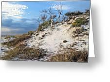 Dunes Of Santa Rosa Island Greeting Card by JC Findley