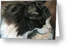 Dusty Our Handsome Norwegian Forest Kitty Greeting Card by LaVonne Hand