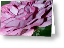 Dusty Rose Greeting Card by Barbara S Nickerson