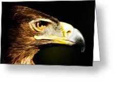 Eagle Eye - Steppes Eagle Profile Greeting Card by Jay Lethbridge