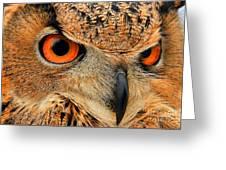 Eagle Owl Greeting Card by Leslie Kirk