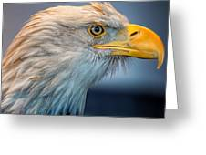 Eagle With An Attitude Greeting Card by Bill Tiepelman