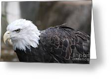 Eagle With Ruffled Feathers Greeting Card by DejaVu Designs