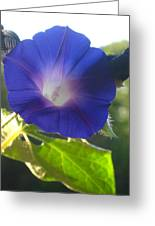Early Morning Glory Greeting Card by Jennifer Doll