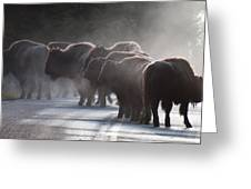 Early Morning Road Bison Greeting Card by Bruce Gourley