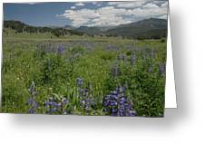Early Spring In Yellowstone Greeting Card by Larry Moloney