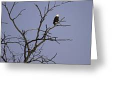 East Side Eagle 2 Greeting Card by Thomas Young