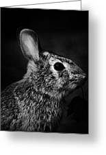 Eastern Cottontail Rabbit Portrait Greeting Card by Rebecca Sherman