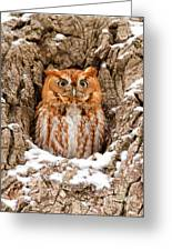 Eastern Screech Owl Greeting Card by Joshua Clark