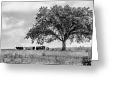 Ebd-9bw Greeting Card by Bob King