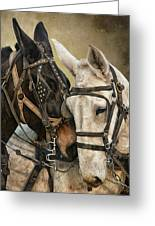 Ebony And Ivory Greeting Card by Ron  McGinnis