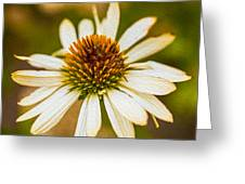 Echinacea Fading Beauty Greeting Card by Omaste Witkowski