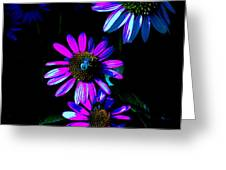 Echinacea Hot Blue Greeting Card by Karla Ricker