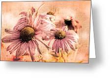 Echinacea Impressions  Greeting Card by Bob Orsillo