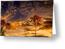 Echinacea Sunset Greeting Card by Bob Orsillo