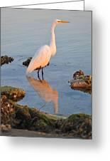 Egret - Dunedin Florida Greeting Card by Bill Cannon