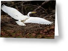 Egret In Flight Greeting Card by Mr Bennett Kent