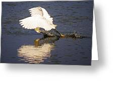 Egret With A Heart Reflection Greeting Card by Paulette Thomas