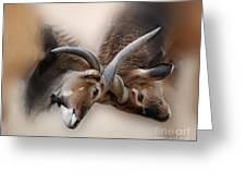 Eland Antelope Heads Greeting Card by TN Fairey
