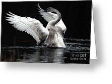 Elegance In Motion 2 Greeting Card by Sharon Talson