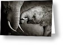 Elephant Affection Greeting Card by Johan Swanepoel