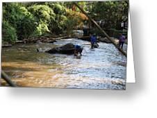 Elephant Baths - Maesa Elephant Camp - Chiang Mai Thailand - 011320 Greeting Card by DC Photographer