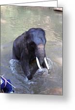 Elephant Baths - Maesa Elephant Camp - Chiang Mai Thailand - 011327 Greeting Card by DC Photographer