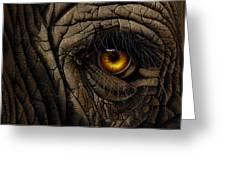 Elephant Eye Greeting Card by Jurek Zamoyski