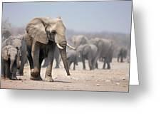 Elephant feet Greeting Card by Johan Swanepoel