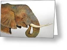 Elephant Head Study Greeting Card by Juan  Bosco