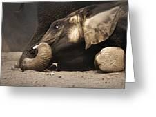 Elephant - lying down Greeting Card by Johan Swanepoel