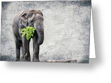 Elephant With A Snack Greeting Card by Tom Gari Gallery-Three-Photography