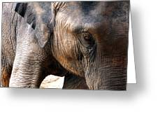 Elephant's Eye Greeting Card by Justin Woodhouse