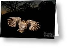 Elf Owl Greeting Card by Scott Linstead