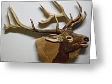 Elk Greeting Card by Annja Starrett