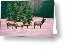 Elk In Canada Greeting Card by Richard Jenkins