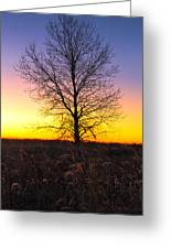 Ellis Island Lone Tree Greeting Card by David Yunker