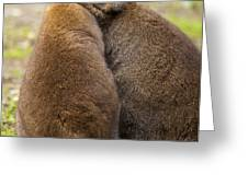 Embrace Greeting Card by Mike  Dawson
