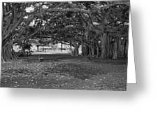 Embraced By Trees Greeting Card by Douglas Barnard