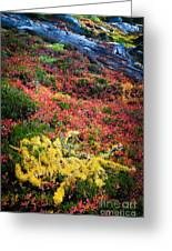 Enchanted Colors Greeting Card by Inge Johnsson