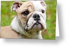 English Bulldog Puppy Greeting Card by Natalie Kinnear