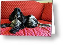 English Cocker Spaniel on Red Sofa Greeting Card by Catherine Sherman
