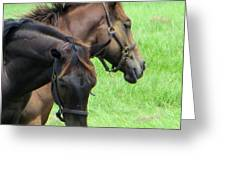 Equine Beauties Greeting Card by Dorothy Menera