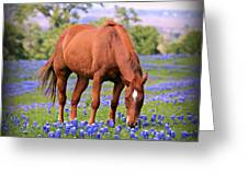 Equine Bluebonnets Greeting Card by Stephen Stookey