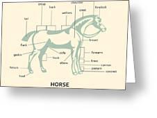 Equus Ferus Caballus Greeting Card by Igor Kislev
