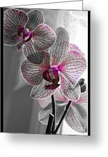 Ethereal Orchid Greeting Card by Bianca Nadeau