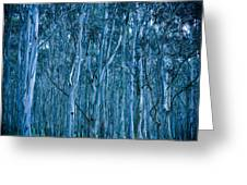 Eucalyptus Forest Greeting Card by Frank Tschakert